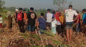 Penemuan Mayat di Kebun Tebu Mojokerto Gegerkan Warga