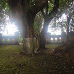 Kisah Misteri Punden KedungSuro, Lelembut Bayar Tunai Ludruk Untuk Sedekah Desa Kedungsari Mojokerto