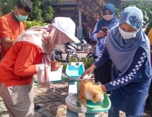 Unik, Posyandu Untuk Kucing Digelar Disnakeswan