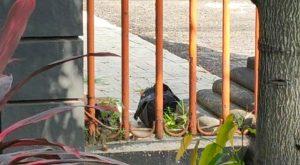 Terungkap Tas Mencurigakan di kantor DPRD kota Kediri, Ternyata Berisi Baterai