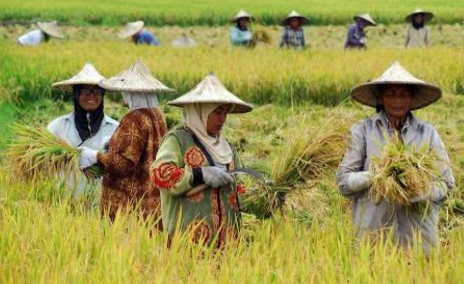 BUMD Bidang Pertanian Diklaim Bisa Atasi Hasil Panen Murah