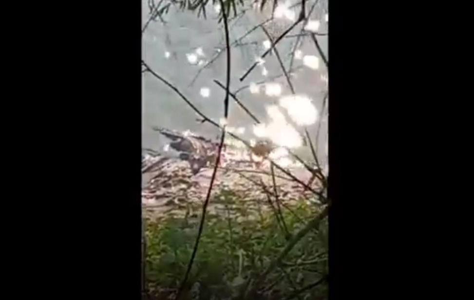 Buaya Berukuran 3 Meter Muncul Di Sungai Bengawan Bolo Hebohkan Warga