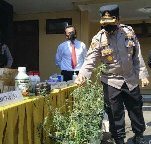 Pengedar Ganja Senilai Ratusan Juta Lintas Provinsi Akhirnya Dibekuk Polisi