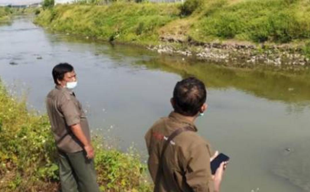 Ternyata Kemunculan Buaya di Kali Sadar Mojokerto, Sudah Diketahui Sejak Lama