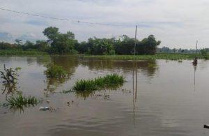 Tanggul Jebol, Lima Desa dan Lahan Pertanian Warga di Blitar Jadi Tambak