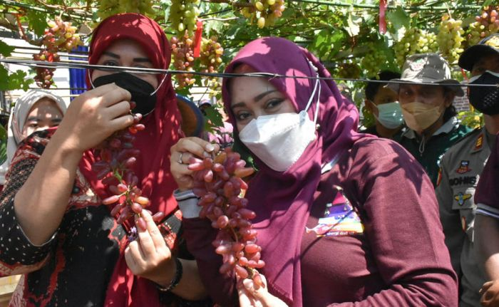 Wisata Kampung Anggur, Bupati Mojokerto, Ikfina Fahmawati
