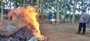 sabung ayam, ayam aduan, banyuwangi, arena sabung ayam dibakar